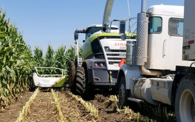 harvesting at the corn field