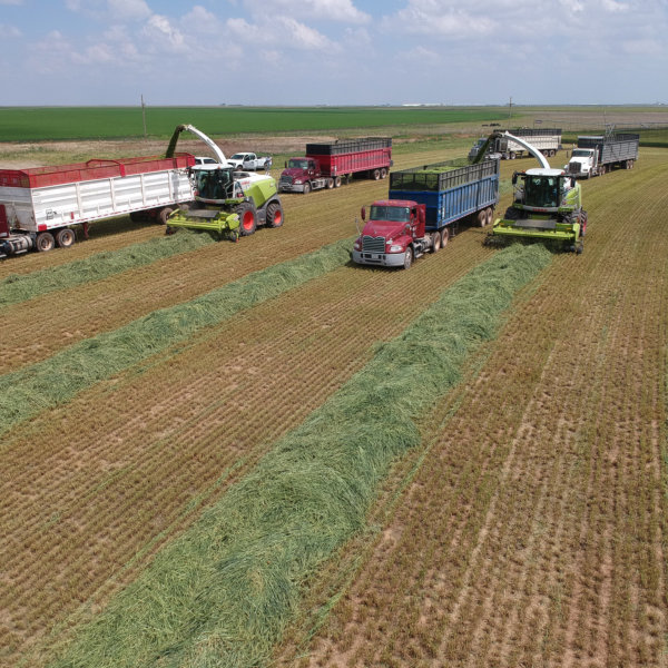 choppers and cargo trucks clearing chopped grasses